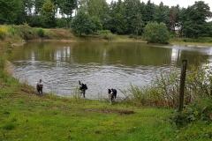 Teich gefunden