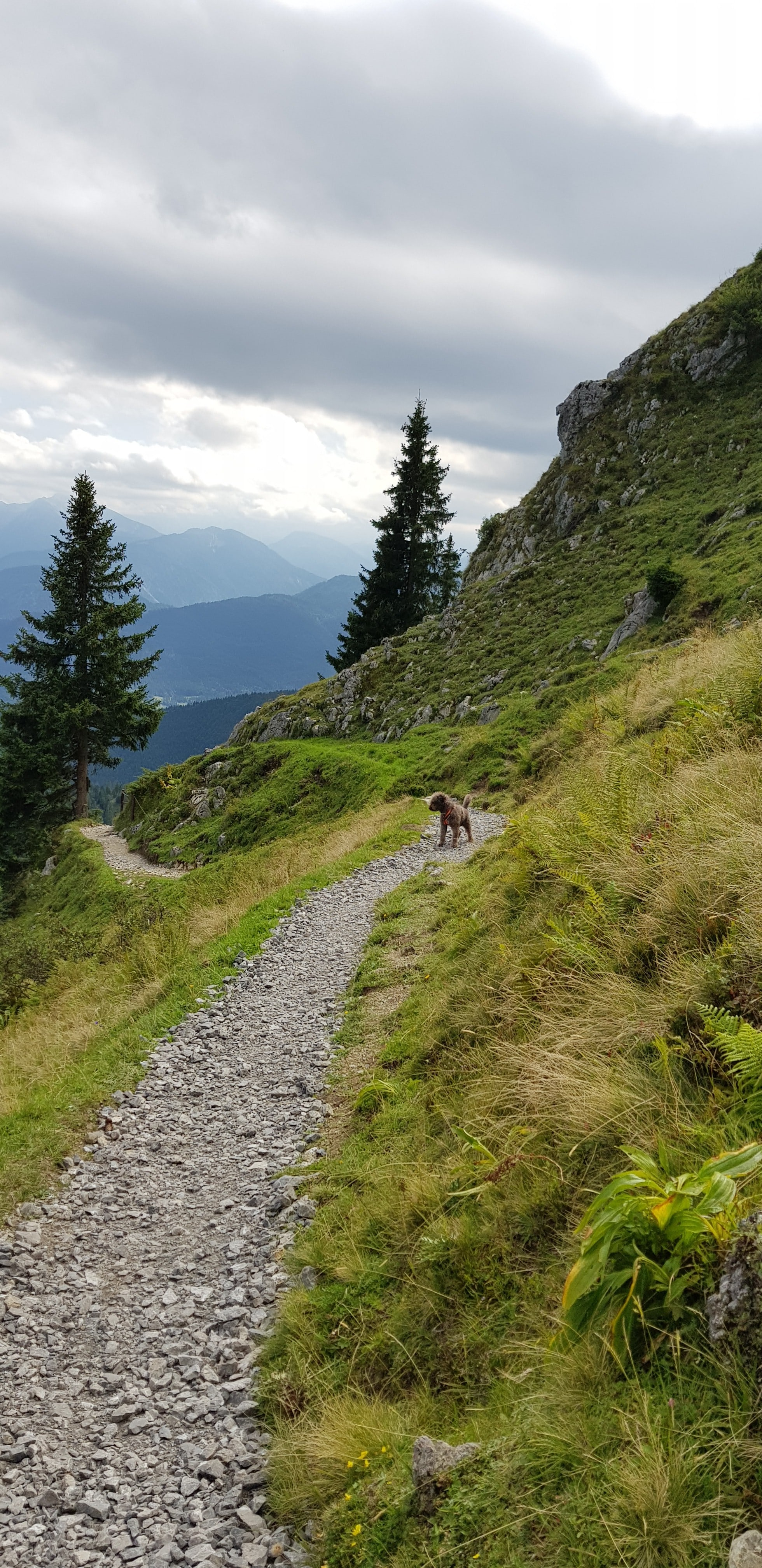 Kleiner Spaziergang auf dem Brauneck.