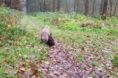 ...im Wald.