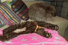 zwei schlafende Plüschis