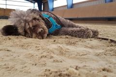 Mío im Sand