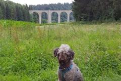 Mío vor dem Viadukt