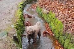 Mío im Wasserlauf