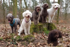 v.l.n.r.: Mío, Hanka, Nubi, Hattie, Ida, vorne: Enna