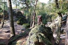 Mío auf dem Felsen