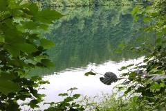 Blick durch die Bäume auf den Silbersee