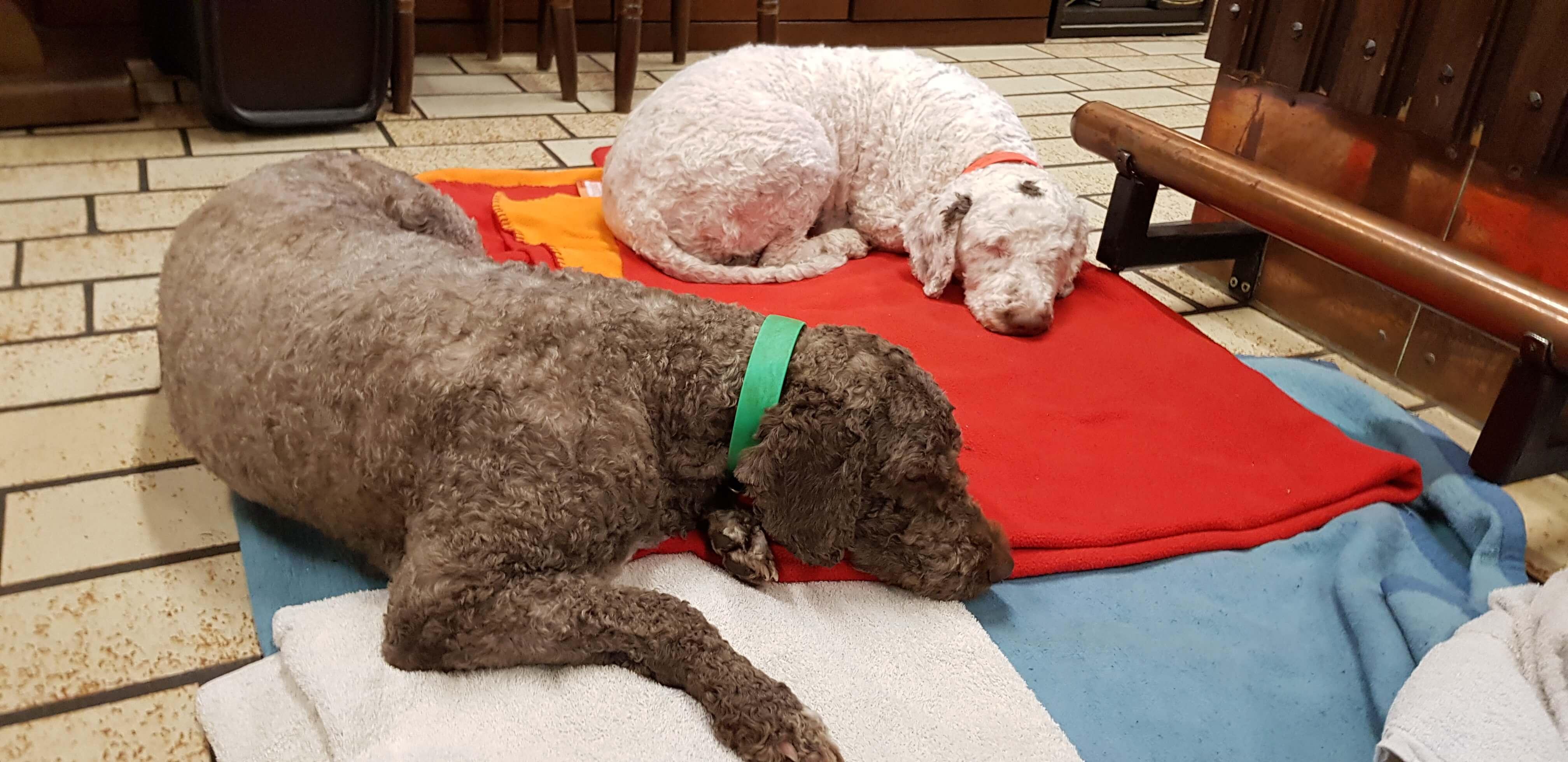 Abby und Bela ruhen.