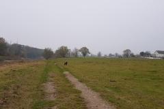 Spaziergang an der Mulde
