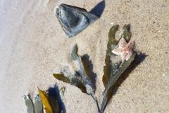 Seestern und Muschel