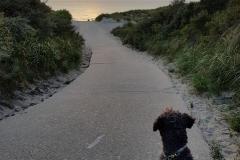 Auf dem Weg zum Strand in Nieuw-Haamstede