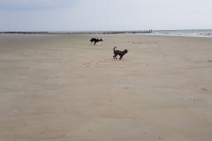 Nix los am Strand von Nieuw-Haamstede
