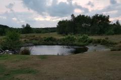 Tümpel im Wildgebiet