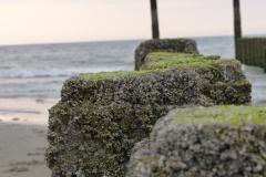 Pfähle am Meer